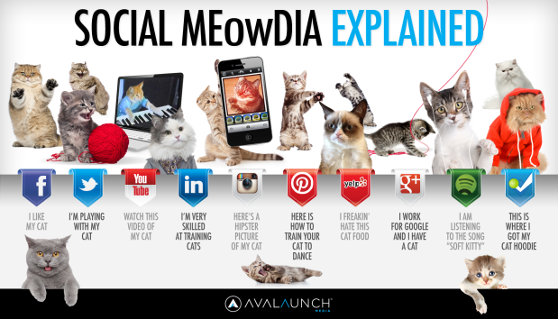 Cats and Social Media: A Winning Combination