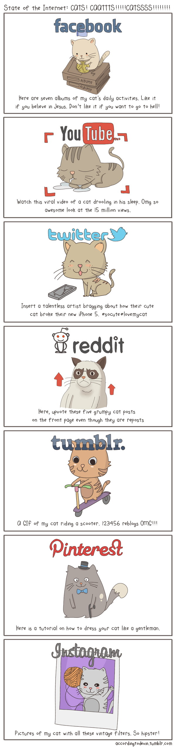 If Social Media Platforms Were Cats...[INFOGRAPHIC]